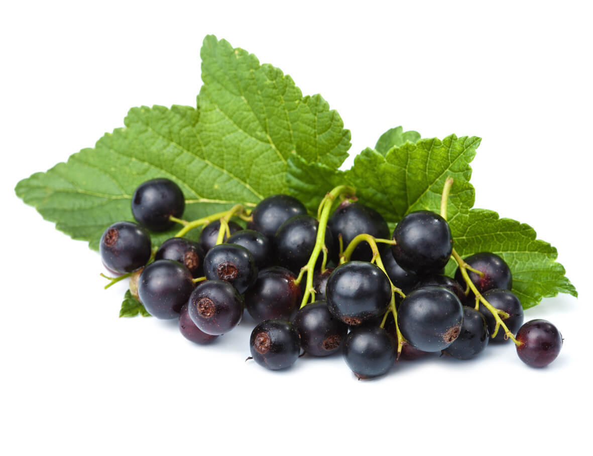 Blackcurrant_S_1